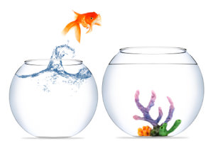 Goldfish jumping to a new bowl is like changing jobs