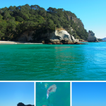 Travel in New Zealand: Coromandel Peninsula Cruise