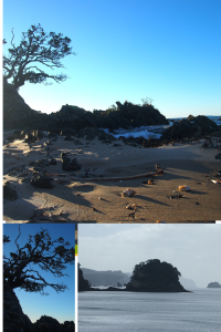 Three scenes from Coromandel Peninsula
